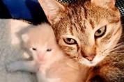 엄마와 이별한 아기 고양이들, 보호소에서 재회