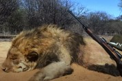 '사자를 보호한다'며 사자를 죽이는 사람들