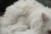 고양이 모양으로 녹아내리는 신기한 아이스크림