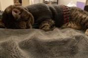 '벗기지 말란 말이애오' 스웨터를 입어야 잠드는 고양이
