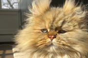 '시간은 츄르다' 부지런한 고양이의 숨 막히는 스케줄