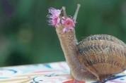 오늘 좀 예쁜데? 달팽이 머리를 꽃단장한 미용사