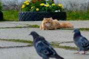 '아오...' 사냥 실패 후 표정관리 안 되는 고양이