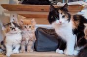 '행복하렴' 사고뭉치 고양이들의 가족사진
