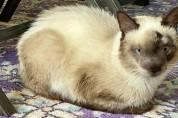 코알라의 외모를 가지게 된 고양이, 카이의 일상