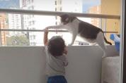 '떼끼!' 위험한 장난을 치는 아이를 혼내는 고양이