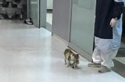 응급실에 새끼를 데려온 고양이에게 최선을 다하는 의료진