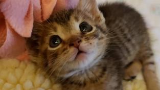 캘리포니아를 정복할 아기 고양이, 마우스