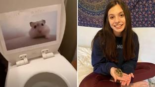 냉장고부터 변기까지 햄스터 사진으로 도배한 딸