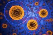 과학자가 말하는 개 구충제 '항암 효과 있지만 추천하지 않아'