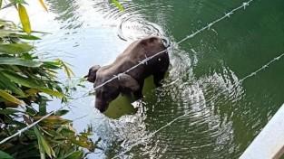전 세계를 울린 사연 '물 위에 선채로 죽은 코끼리'