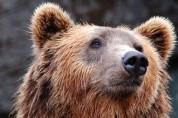 곰의 사형선고 소식에 들끓는 이탈리아 여론