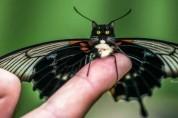 '고양이를 닮은 나비?' 웰컴 투 고양이 월드!