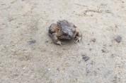 산책 중 만난 두꺼비를 위해 하루를 희생한 여성