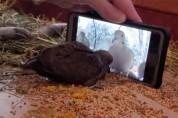 온라인 강의 듣는 아기 비둘기 '1강, 맛있게 먹자'