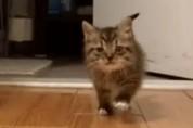 아기 고양이가 되어 가족을 찾아온 할머니