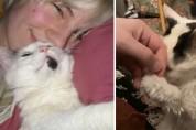 나의 영원한 친구 29살 고양이 '마고'