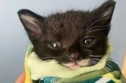 시한부 판정을 받은 아기 고양이의 반전 스토리
