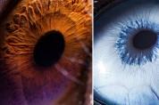 동물의 눈 속에 담긴 놀라운 우주