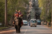 앙코르와트 '코끼리 트래킹' 금지 선언!