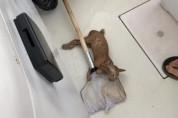 상어 미끼로 사용된 아기 고양이, 뜰채로 구조