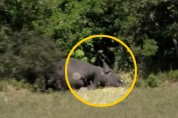 보츠와나, 코끼리 350마리 의문의 떼죽음