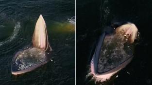 '슬픈 진화' 사냥법을 바꾼 브라이드 고래들