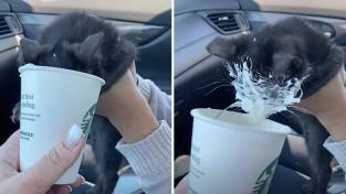 '말리지 마요' 아기 고양이의 시원한 퍼푸치노 먹방