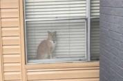 '반려묘가 가출한 줄 알고' 우는 집사를 구경하는 고양이