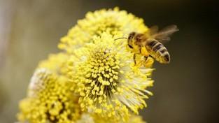 죽이지 마세요! 꿀벌을 보호해야 하는 이유