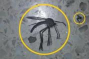 주먹만 한 모기를 본 전문가 '그 옆의 작은 모기가 더 위험'