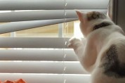 국정원 감시 리스트에 오른 수상한 고양이들
