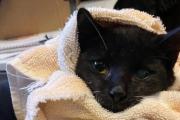 배고파서 나뭇잎 뜯어 먹던 아기 고양이