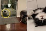 '나도 행복할래' 행복한 고양이를 구경하는 길고양이
