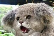 고양이 합성 장인의 인스타그램