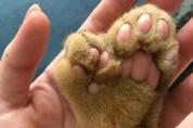 특이한 유전병을 가진 고양이들 '그래도 사랑스럽다'