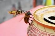 '꺼져' 맥주 마시던 꿀벌을 던져버린 말벌