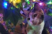 '동화 같은 실화' 마법의 나무에 사는 고양이, 루나