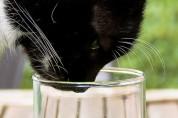 고양이는 마시는 물에도 취향이 있나요?