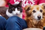 노령견에게 '마음을 여는 법'을 배운 보호소 고양이