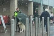 개에게 우산을 양보한 경비원