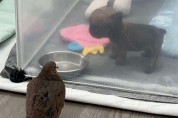 '두근거림이 멈추질 않아' 1초 만에 사랑에 빠진 비둘기와 강아지