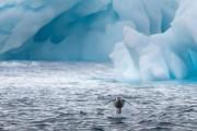 숨 막힐 정도로 아름다운 남극 속 펭귄들