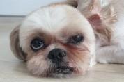 입양된 지 6년이 지나서야 파양된 강아지 '제아'