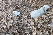 '언니한테 장난감 뺏길라' 낙엽 속에 숨은 댕댕이