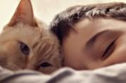 고양이 골골송의 놀라운 7가지 효과!