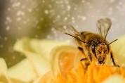 '우린 겨울잠 안 자는데요' 꿀벌이 들려주는 3가지 고백