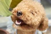 '사랑해'라는 말을 듣고 자란 강아지가 행복하다!