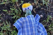 추위에 기절한 이구아나에게 담요를 덮어준 여성
