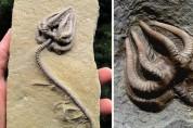'체스트 버스터'가 진짜였어? 감탄사 절로 나오는 화석